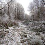 Collin Park Wood